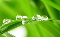 Morning-dew-on-the-fresh-green-leaves_m.jpg
